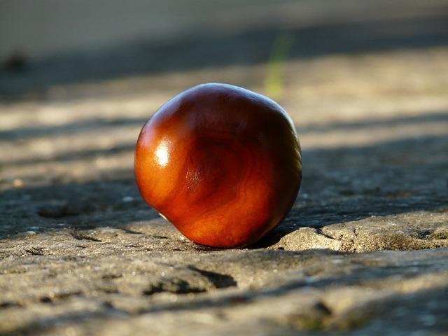 chestnut-60482_640